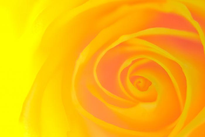 која боја је комбинована са жутом