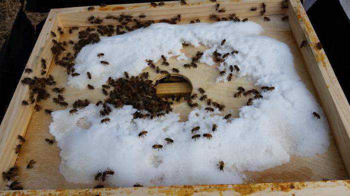 Cosa mangiano le api in inverno?