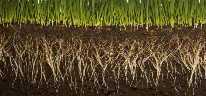 nutrizione minerale delle piante