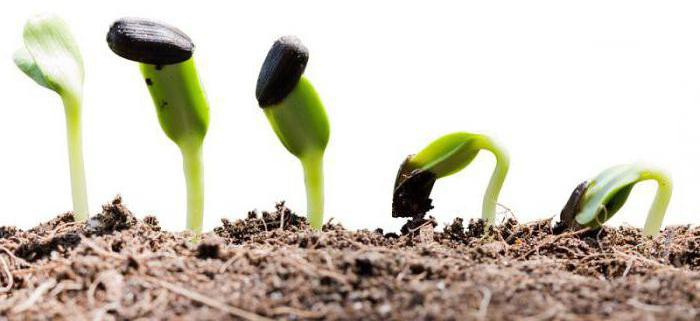 nutrizione dell'aria delle piante