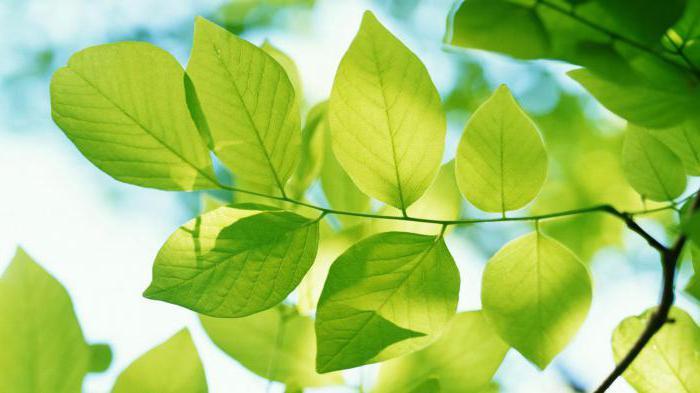 modi insoliti di nutrizione delle piante