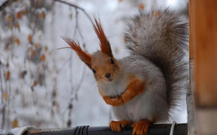 cosa mangiano gli scoiattoli nella foresta