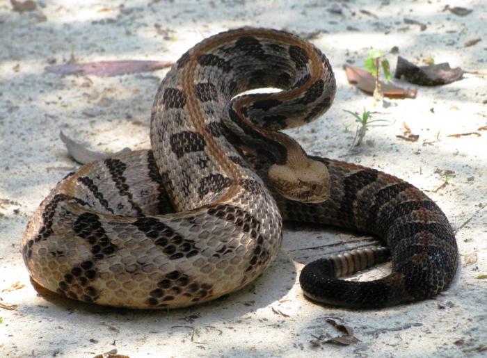 cosa sognano i serpenti?