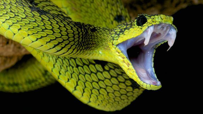 serpente nell'acqua
