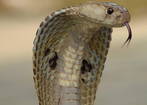Dormi piccolo serpente