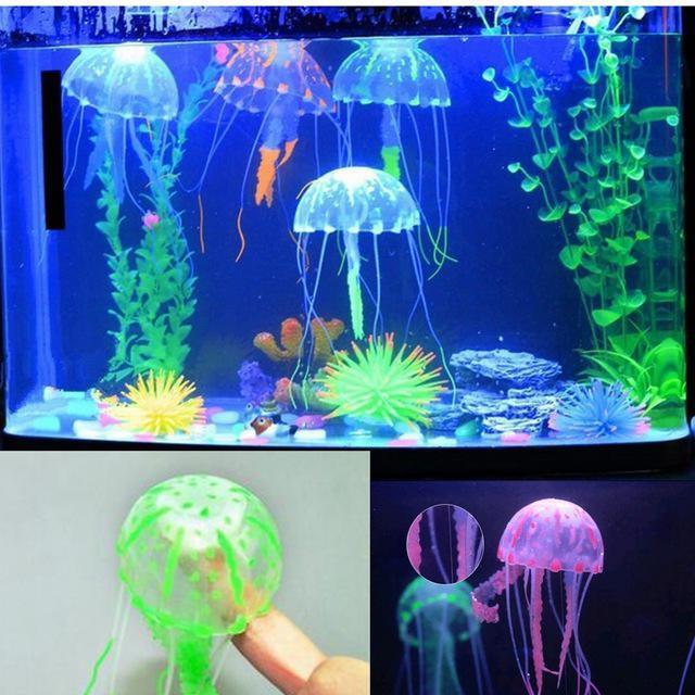 medusa di quanto mangia