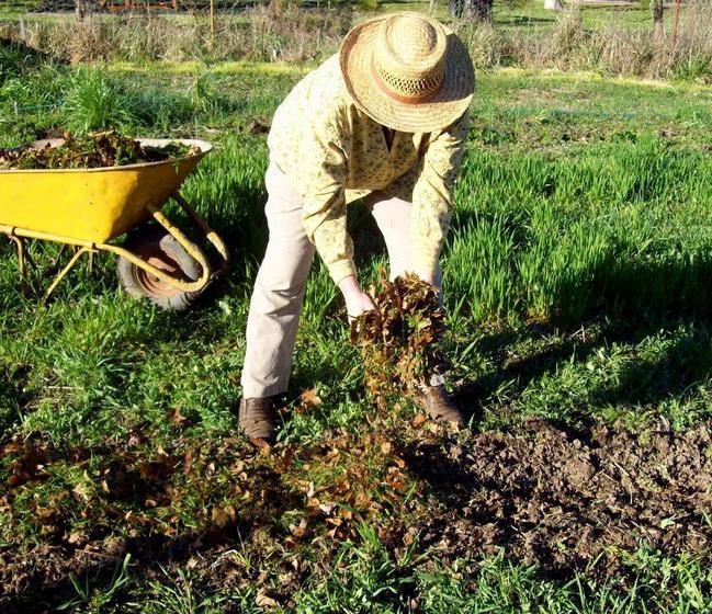 Почвата за торене през есента