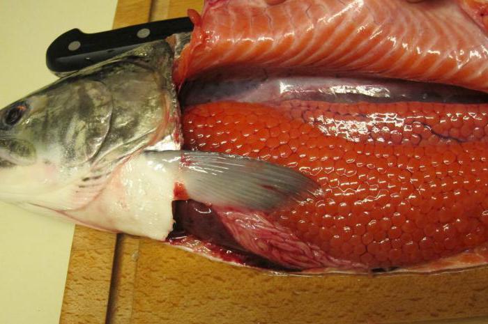 caviale rosso quale pesce è il migliore