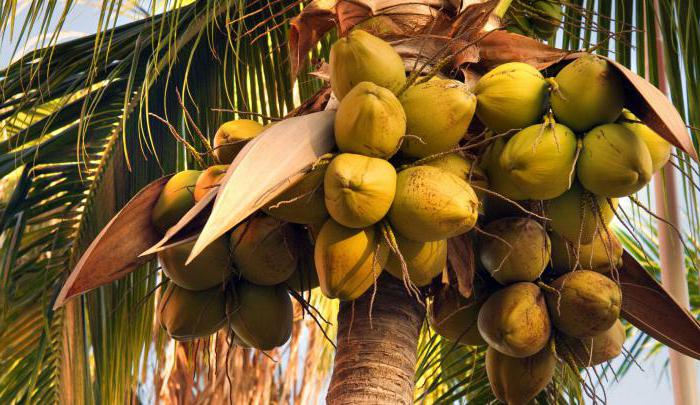 воће са палмом