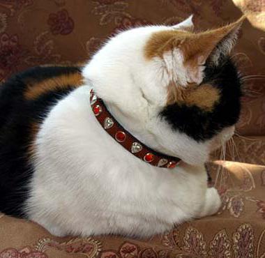 огрлица за мачку