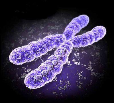 set cromosoma aploide e diploide