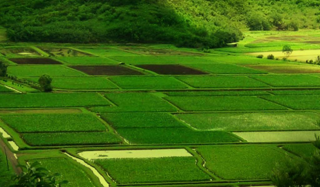 działki rolnicze