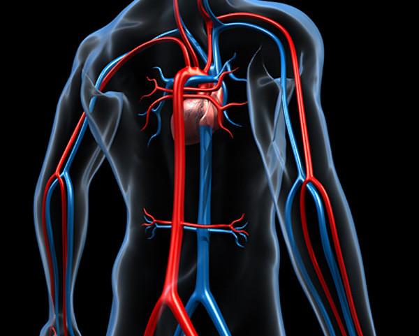 Czym jest aorta?