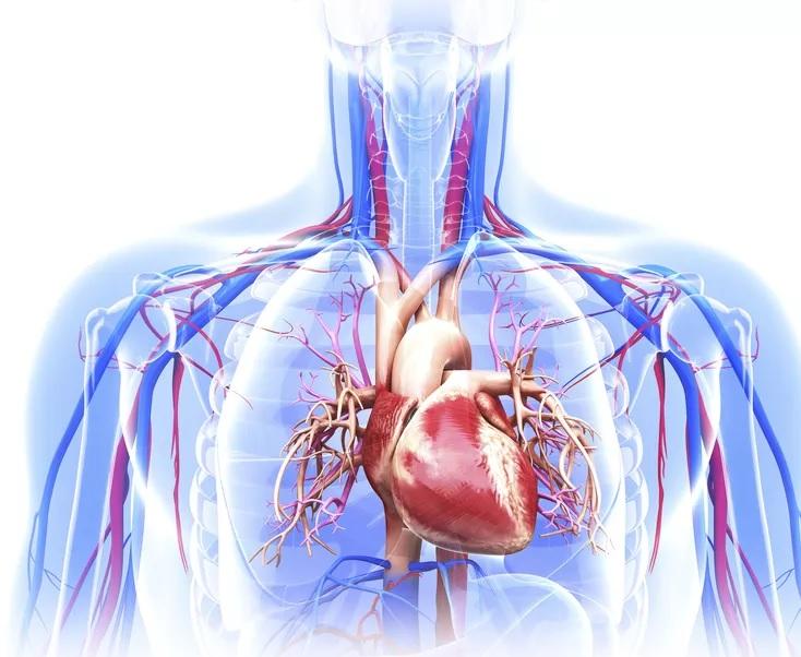 Działy aorty