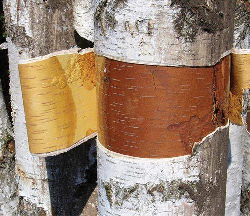 proizvodi od brezove kore