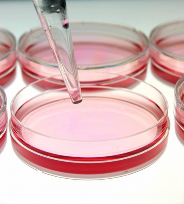 inženjerstvo biljnih ćelija