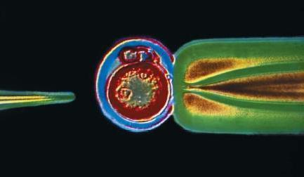 inženjerstvo stanica biotehnologije