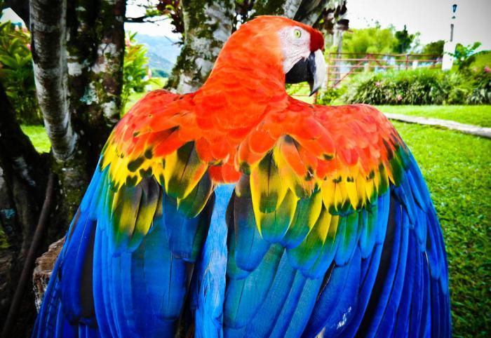È possibile per i semi di pappagalli