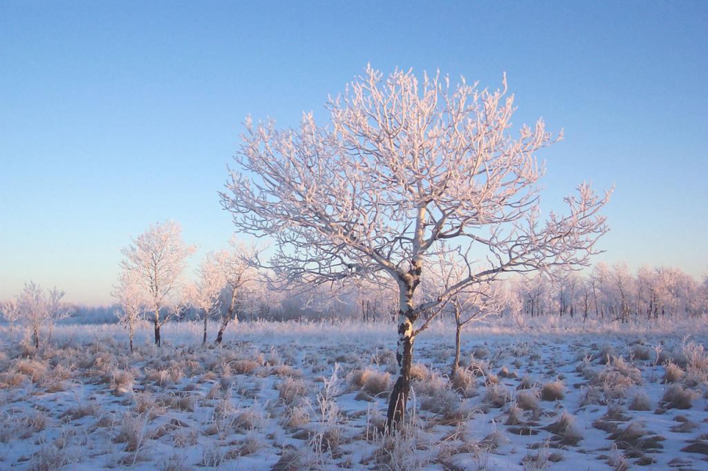 Frost е студено време