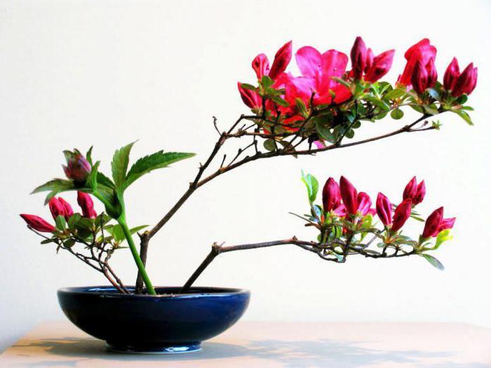 Zdjęcie ikebana