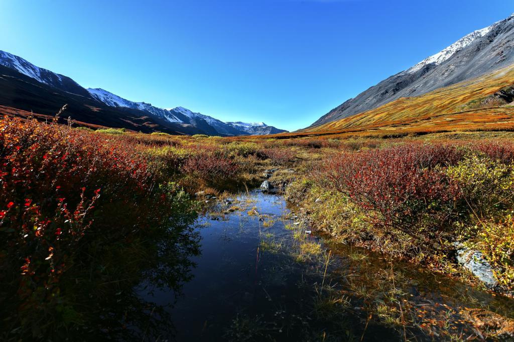 Езерото в тайгата