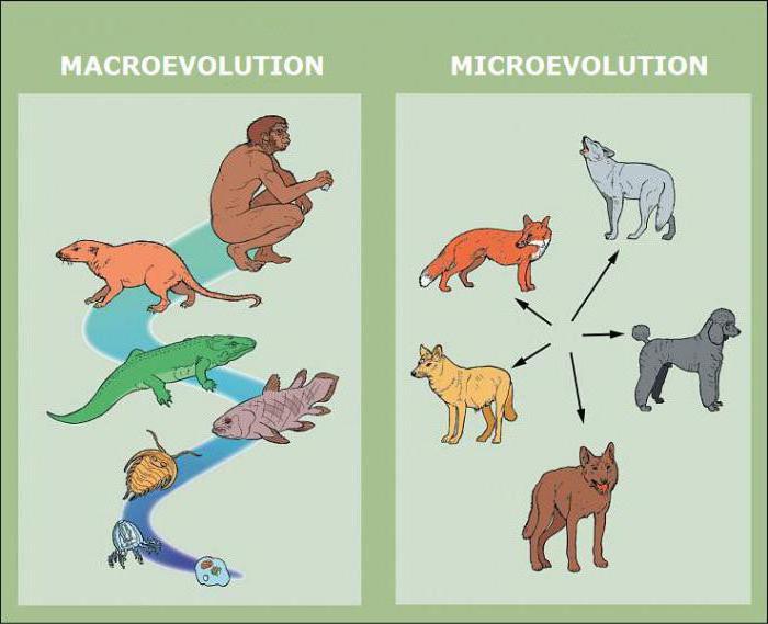 što je mikroevolucija