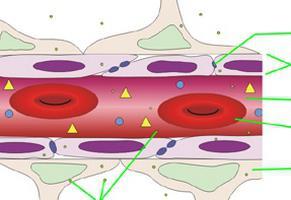 кръвно-мозъчна бариера