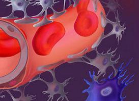 кръвно-мозъчната бариера, какво е това