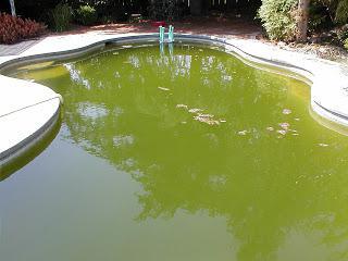 popływać w basenie