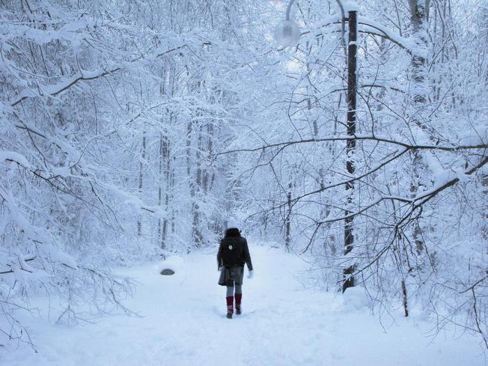 san iz snova sanjao je o zimi
