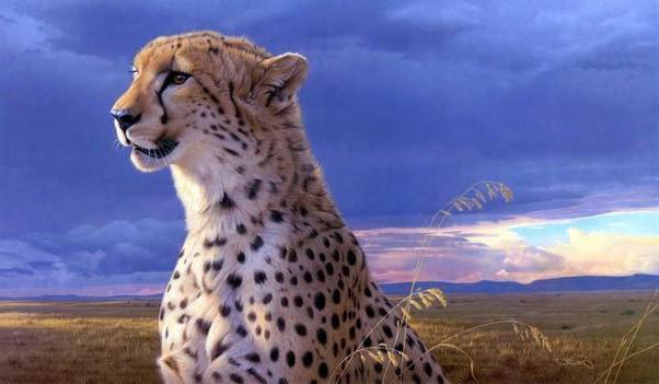 quale animale è il più grazioso