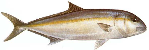 riba koja je najkorisnija za djecu