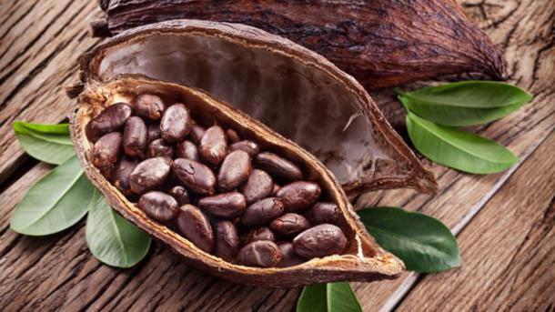 come sono utili i semi di cacao