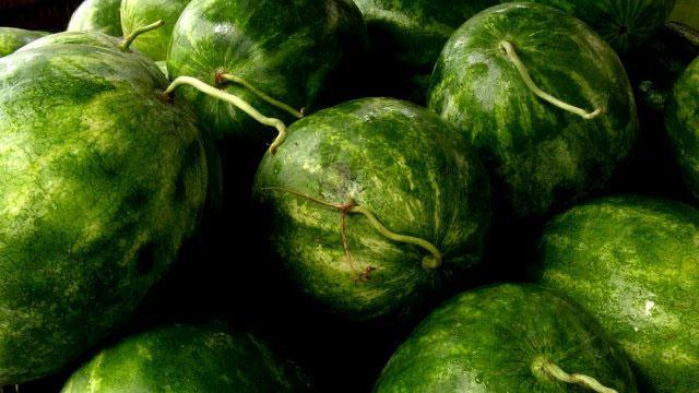 корисне особине лубенице