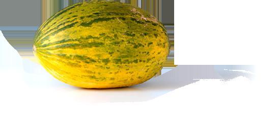 ciò che è buono per il melone del corpo