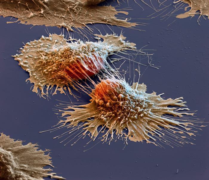 foto stanice raka