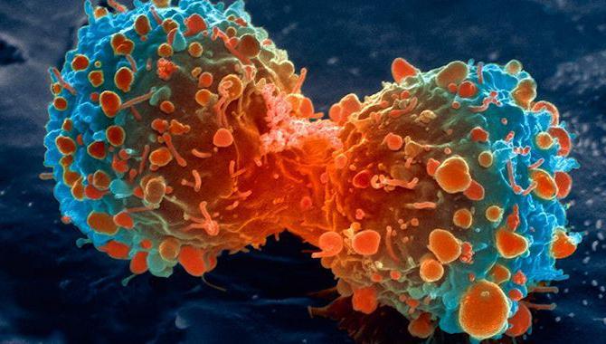 koji ubija stanice raka