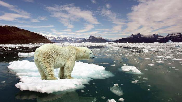 Къде живее полярната мечка на кой континент