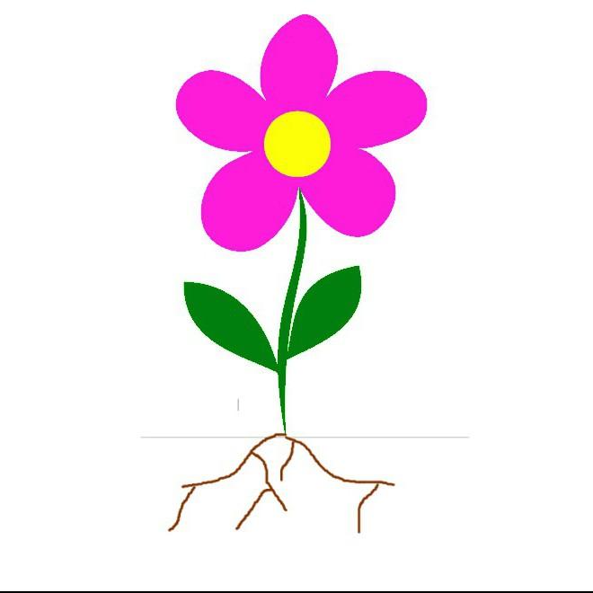 In quali parti consiste il corpo di una pianta in fiore