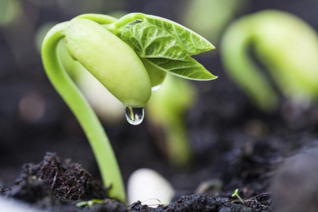 quali parti è il germe della pianta