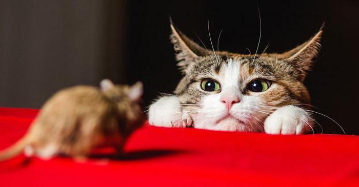 zapachy, które boją się myszy i szczurów
