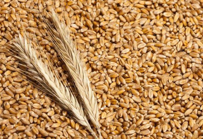 Пшенични полета