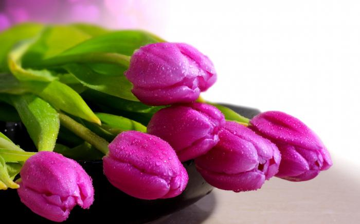 Kdaj posaditi tulipane