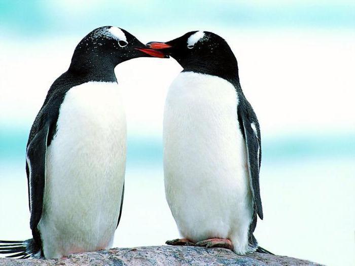 dove vivono i pinguini nell'Artico o nell'antartico