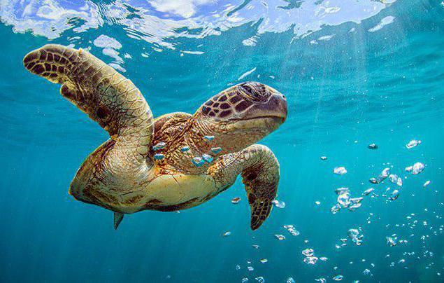 kde žijí želvy