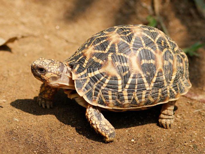 prehrana želv
