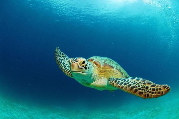 opis vrst želve