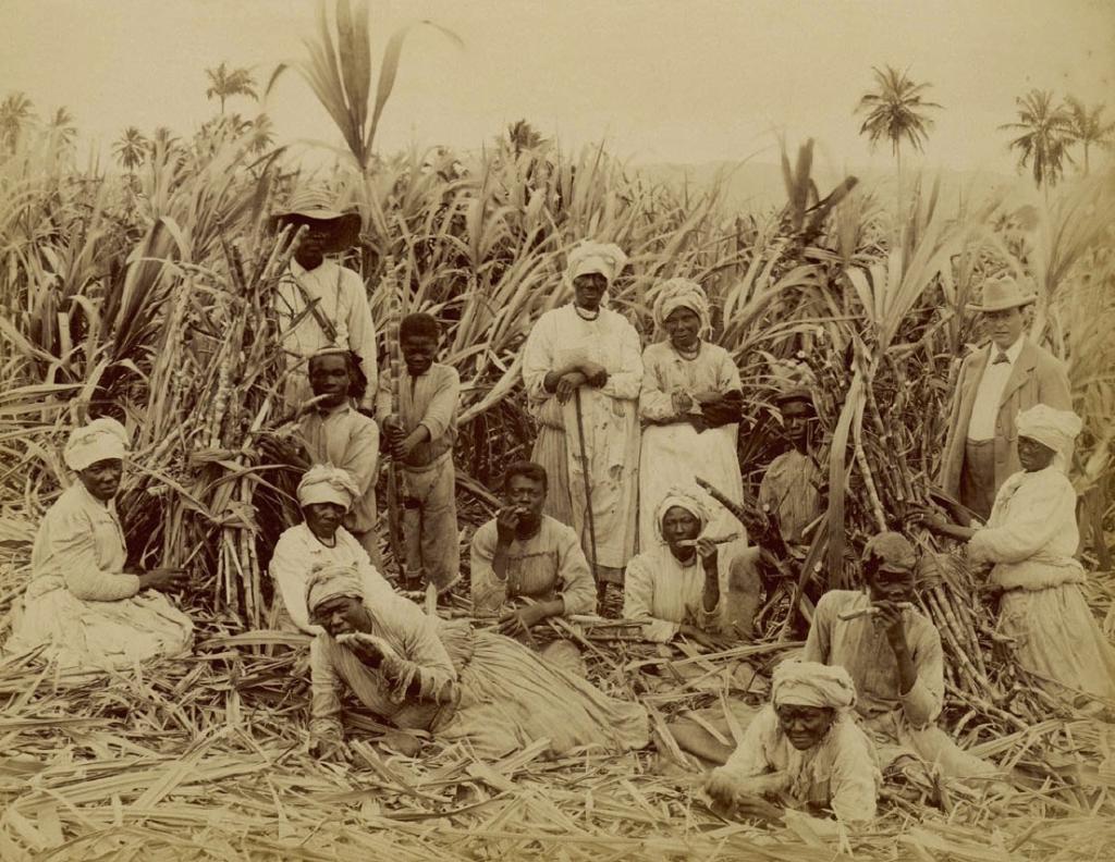 robovi šećerne plantaže