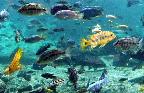 Odpady lub drenaż z jeziora Tanganika