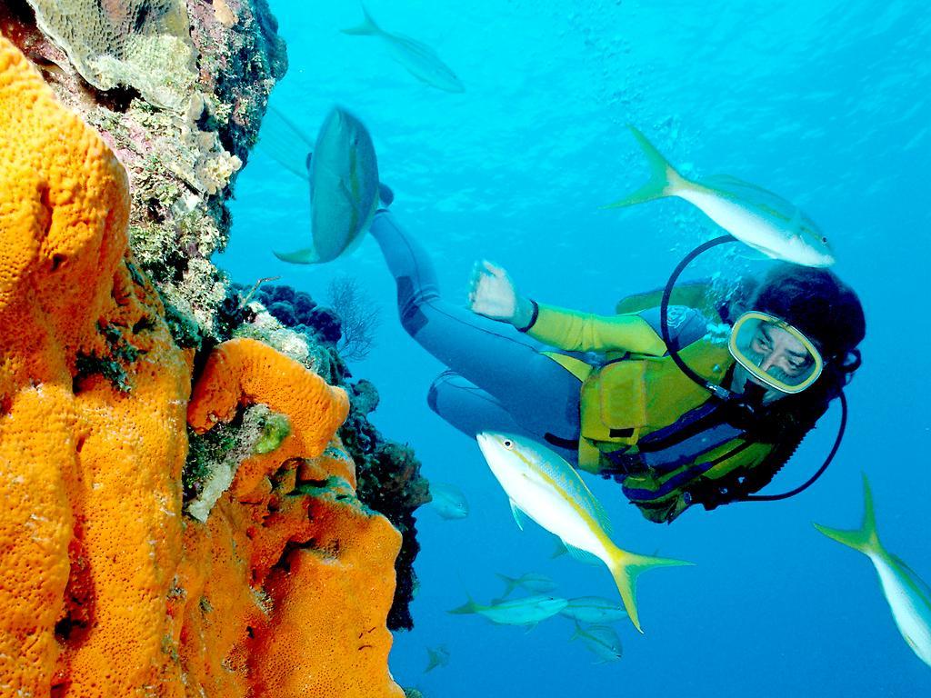 Immersioni in mauritius